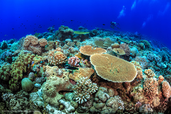 Tane-Sinclair-Taylor_DIPnet_Wide_Surveying-Coral-Reefs_591